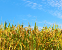 農地法の許可
